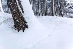 μαύρα μπλε τονισμένα άσπρα τοπίο χειμερινά δάση φωτογραφιών διαβάσεων πεζών Στοκ εικόνες με δικαίωμα ελεύθερης χρήσης