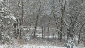 μαύρα μπλε τονισμένα άσπρα τοπίο χειμερινά δάση φωτογραφιών διαβάσεων πεζών Στοκ Εικόνα