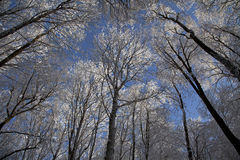 μαύρα μπλε τονισμένα άσπρα τοπίο χειμερινά δάση φωτογραφιών διαβάσεων πεζών Στοκ εικόνα με δικαίωμα ελεύθερης χρήσης
