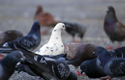 μαύρα οικογενειακά πρόβα Στοκ εικόνα με δικαίωμα ελεύθερης χρήσης