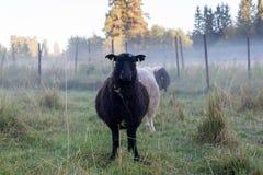 μαύρα οικογενειακά πρόβα Στοκ φωτογραφία με δικαίωμα ελεύθερης χρήσης