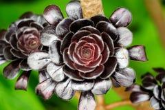 μαύρα λουλούδια Στοκ Φωτογραφία