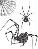 Μαύρα σκίτσα αραχνών χηρών Στοκ εικόνα με δικαίωμα ελεύθερης χρήσης