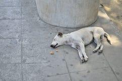 Μαύρα σκυλιά που κοιμούνται στον πάγκο Στοκ Φωτογραφίες