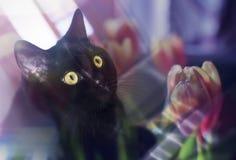 Μαύρα σύνολα γατών στο παράθυρο, Στοκ Φωτογραφία