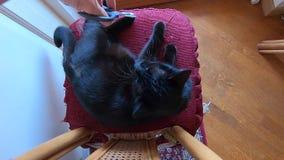 Μαύρα τέμνοντα νύχια γατών φιλμ μικρού μήκους