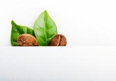 Μαύρα φασόλια καφέ, σιτάρι με το φύλλο στοκ φωτογραφία με δικαίωμα ελεύθερης χρήσης