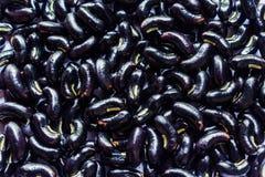 Μαύρα φασόλια στοκ φωτογραφία με δικαίωμα ελεύθερης χρήσης