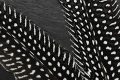 Μαύρα φτερά με τα άσπρα σημεία στο μαύρο υπόβαθρο πετρών στοκ φωτογραφίες