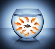 Μαύρα ψάρια στοκ φωτογραφία με δικαίωμα ελεύθερης χρήσης