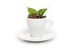 Μαύρα ψημένα arabica φασόλια καφέ Στοκ φωτογραφίες με δικαίωμα ελεύθερης χρήσης