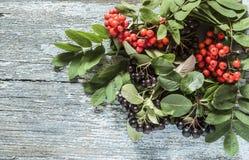 Μαύρα chokeberry (melanocarpa Aronia) μούρα με το Δεκέμβριο μούρων τέφρας στοκ φωτογραφίες