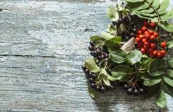Μαύρα chokeberry (melanocarpa Aronia) μούρα με το Δεκέμβριο μούρων τέφρας στοκ εικόνες