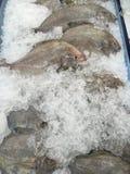 Μαύρα pomfret ψάρια Στοκ φωτογραφία με δικαίωμα ελεύθερης χρήσης