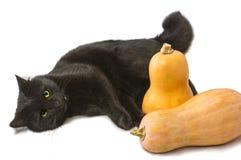Μαύρες γάτα και κολοκύθες στοκ εικόνες