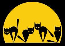 μαύρες γάτες Στοκ Εικόνες