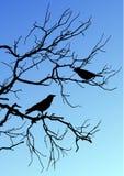 Μαύρες διανυσματικές σκιαγραφίες δύο πουλιών που κάθονται σε έναν κλάδο στο blu απεικόνιση αποθεμάτων