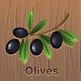 Μαύρες ελιές σε έναν κλάδο διανυσματική απεικόνιση