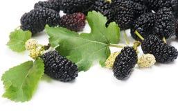 Μαύρες μουριές με τα φύλλα (nigra Λ Morus ) Στοκ Φωτογραφία