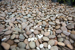 μαύρες να περπατήσει ακτών πέτρες Στοκ Εικόνες