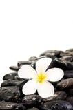 μαύρες πέτρες λουλουδ&io Στοκ Εικόνες
