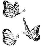 μαύρες πεταλούδες που απομονώνονται στο άσπρο υπόβαθρο, κινηματογράφηση σε πρώτο πλάνο στοκ εικόνες