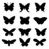 Μαύρες πεταλούδες που τίθενται στο άσπρο υπόβαθρο Στοκ Εικόνες