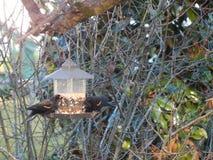 Μαύρες πουλιά και επιχείρηση στοκ εικόνες