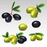 μαύρες πράσινες ελιές απεικόνιση αποθεμάτων