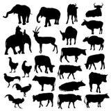 Μαύρες σκιαγραφίες των ελεφάντων, αγελάδες, ταύροι Στοκ φωτογραφία με δικαίωμα ελεύθερης χρήσης