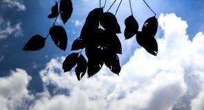 Μαύρες σκιαγραφίες φύλλων, σκιαγραφία κλάδων Στοκ φωτογραφίες με δικαίωμα ελεύθερης χρήσης