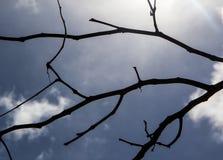 Μαύρες σκιαγραφίες φύλλων, σκιαγραφία κλάδων Στοκ Εικόνες