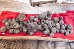 Μαύρες τρούφες στα ιταλικά αίθουσα εκθέσεως Στοκ Εικόνα