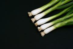 μαύρη άνοιξη κρεμμυδιών ανα&s Στοκ Εικόνες