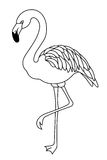Μαύρη άσπρη απεικόνιση πουλιών φλαμίγκο Στοκ Φωτογραφία