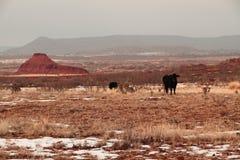 μαύρη έρημος του Angus Στοκ Εικόνες