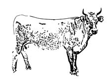 μαύρη αγελάδα διανυσματική απεικόνιση