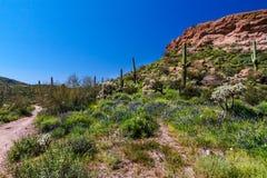 Μαύρη αγριότητα βουνών δεισιδαιμονίας ιχνών Mesa Αριζόνα Στοκ Εικόνα