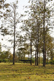 Μαύρη αιώρα σε ένα πάρκο Στοκ Φωτογραφία