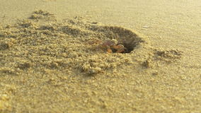 μαύρη ακροθαλασσιά καβουριών παραλιών στοκ φωτογραφία με δικαίωμα ελεύθερης χρήσης
