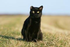 μαύρη γάτα έχουσα νώτα ηλιο& Στοκ Εικόνα