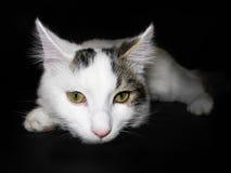 μαύρη γάτα ανασκόπησης χαρι στοκ εικόνες με δικαίωμα ελεύθερης χρήσης