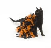 μαύρη γάτα αποκριές Στοκ φωτογραφίες με δικαίωμα ελεύθερης χρήσης