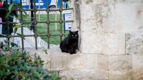 Μαύρη γάτα από το μπλε μουσουλμανικό τέμενος, Ιστανμπούλ, Τουρκία Στοκ εικόνα με δικαίωμα ελεύθερης χρήσης