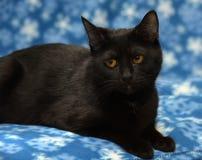 Μαύρη γάτα Βρετανοί Στοκ φωτογραφία με δικαίωμα ελεύθερης χρήσης