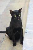 Μαύρη γάτα - γλώσσα έξω Στοκ Εικόνες