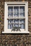 Μαύρη γάτα μετάλλων στη στρωματοειδή φλέβα παραθύρων Στοκ Φωτογραφίες