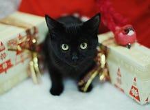 Μαύρη γάτα μεταξύ των δώρων Χριστουγέννων Η ατμόσφαιρα του νέου έτους Στοκ Εικόνες