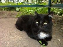 Μαύρη γάτα με ένα άσπρο σημείο Στοκ φωτογραφία με δικαίωμα ελεύθερης χρήσης