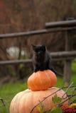 Μαύρη γάτα με μια κολοκύθα Στοκ Εικόνα